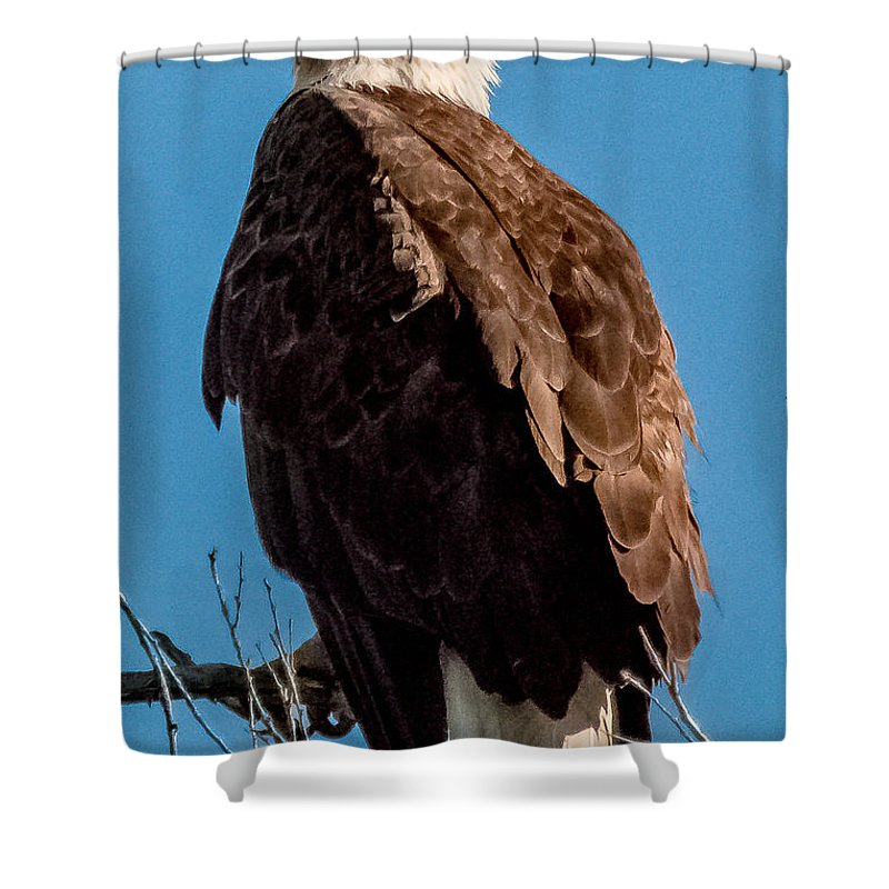Bald Eagle Shower Curtain featuring the photograph Eagle Of The Salt River by Ronald Hunt