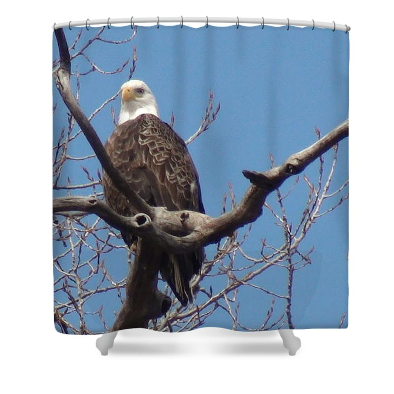 Eagle Shower Curtain featuring the photograph Eagle Watching by Kathy Sevcik