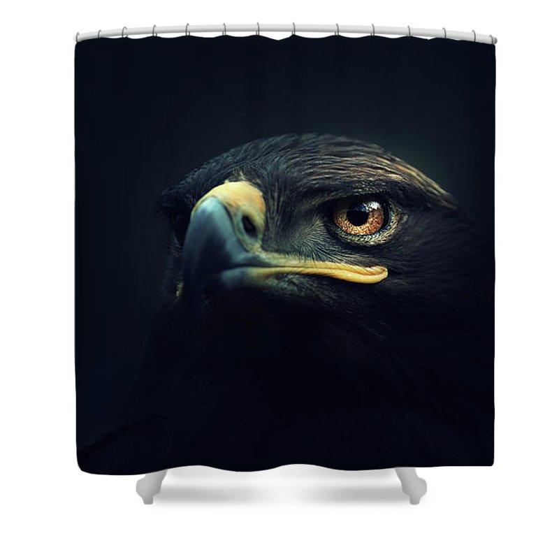Bird Of Prey Shower Curtains