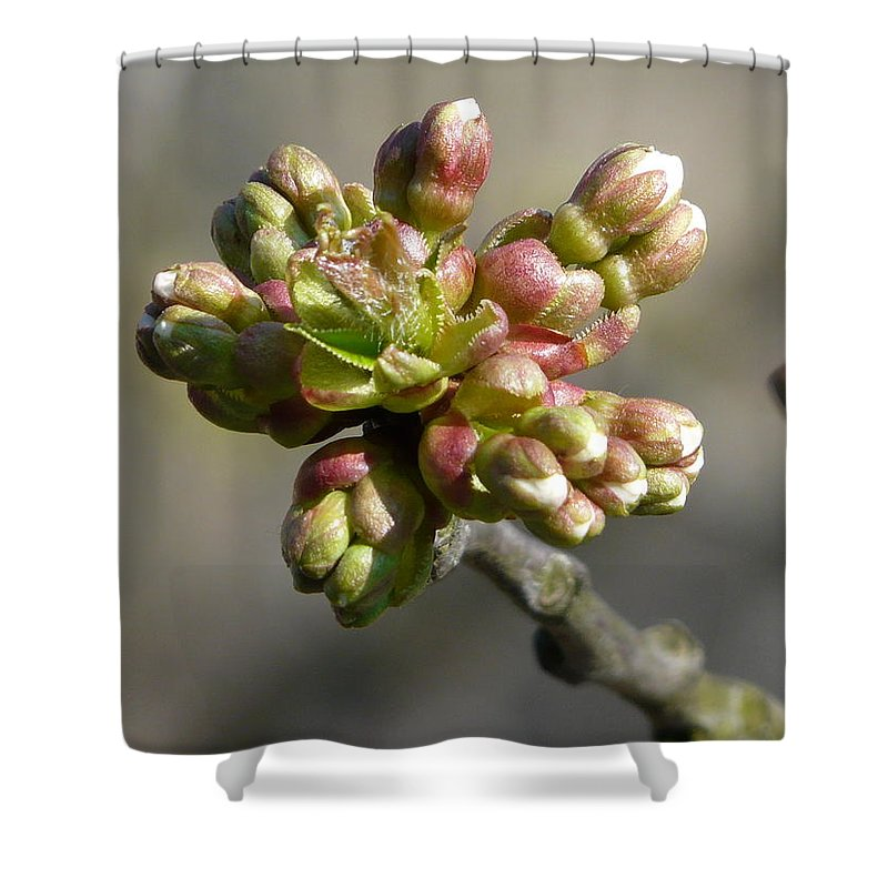 Cherry Shower Curtain featuring the photograph Early Cherry Blossom by Valerie Ornstein