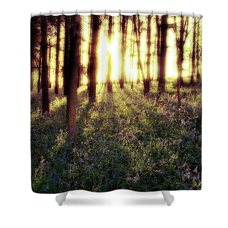 Sunrise Shower Curtain featuring the photograph Early Morning Amongst The by John Edwards