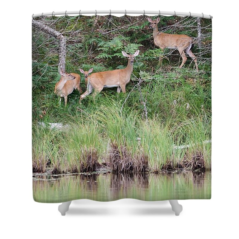 Whitetail Shower Curtain featuring the photograph Early Morning At The Lake by Michael Peychich