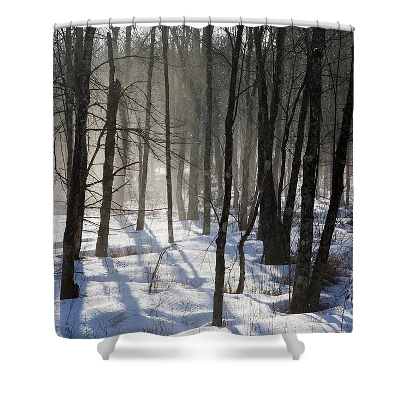 Fog Shower Curtain featuring the photograph Early Morning Fog In A New Hampshire Forest by Erin Paul Donovan