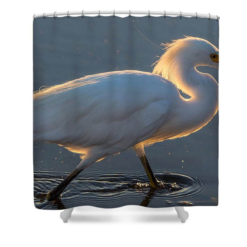 California Shower Curtain featuring the photograph Early Morning Light On Egret by Marc Crumpler