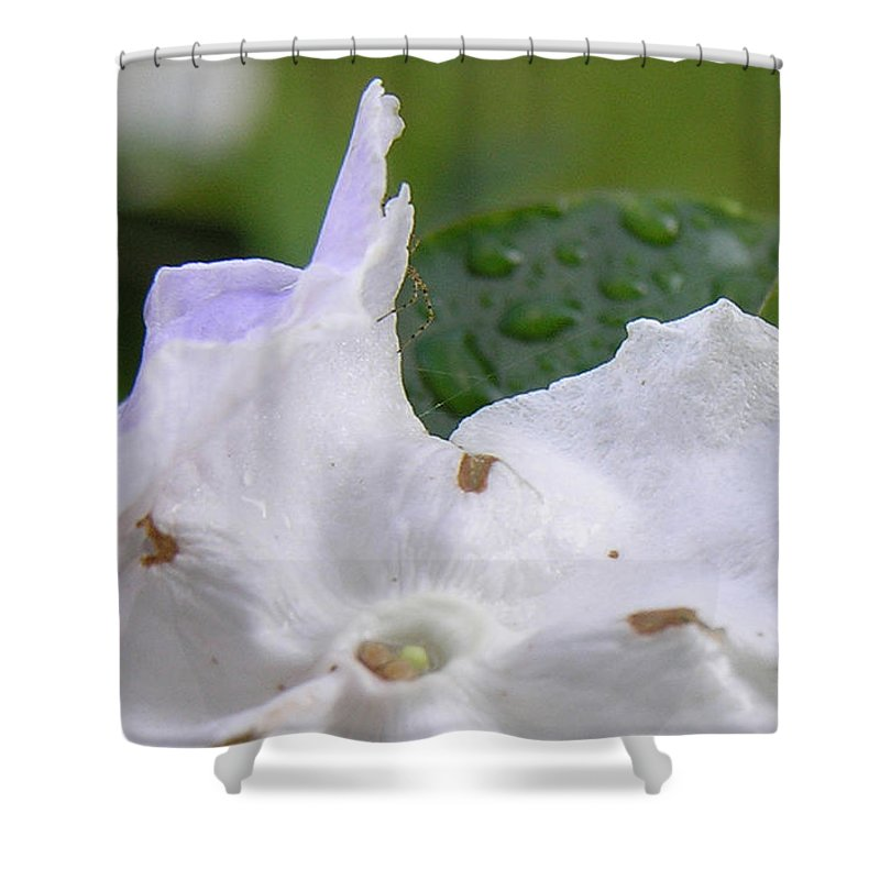 Flower Shower Curtain featuring the photograph Easter Surprise by Richard Rizzo