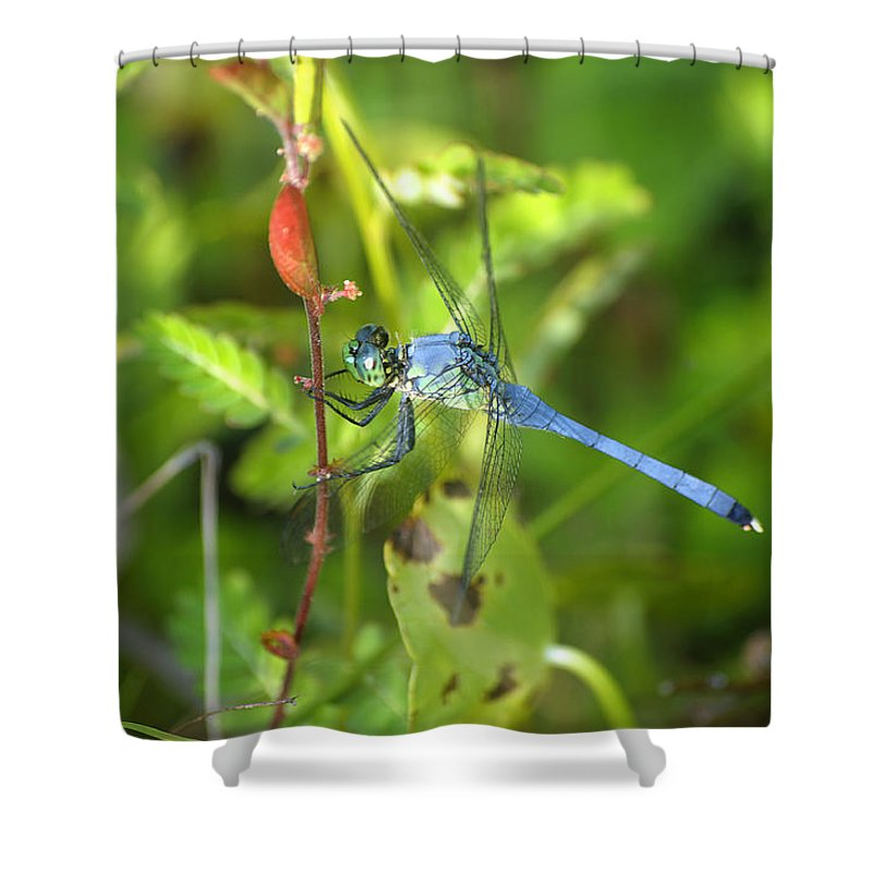 Dragonfly Shower Curtain featuring the photograph Eastern Pondhawk Dragonfly by Kenneth Albin