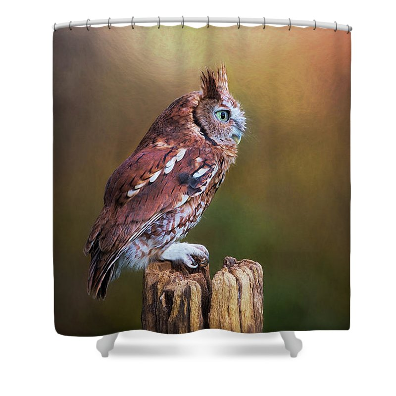 Owl Shower Curtain featuring the photograph Eastern Screech Owl Red Morph Profile by Sharon McConnell