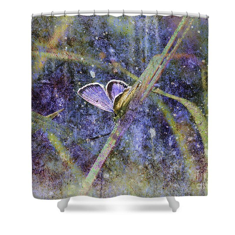 Butterfly Shower Curtain featuring the photograph Eastern Tailed Blue by Sari Sauls