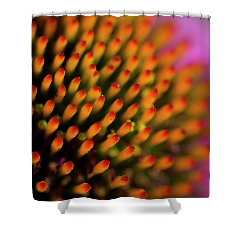 Echinacea Shower Curtain featuring the photograph Echinacea Coneflower Abstract by Kathy Clark