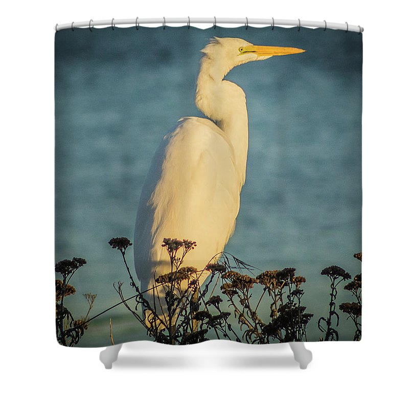Egret Shower Curtain featuring the photograph Egret At Dusk by Elaine Webster