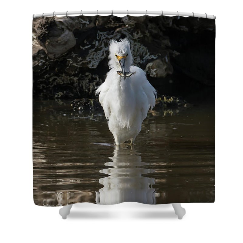 Egret Shower Curtain featuring the photograph Egret Catches A Stickleback by Bruce Frye