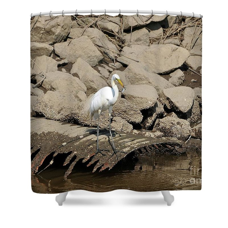 Great Egret Shower Curtain featuring the photograph Egret Fishing by Al Powell Photography USA