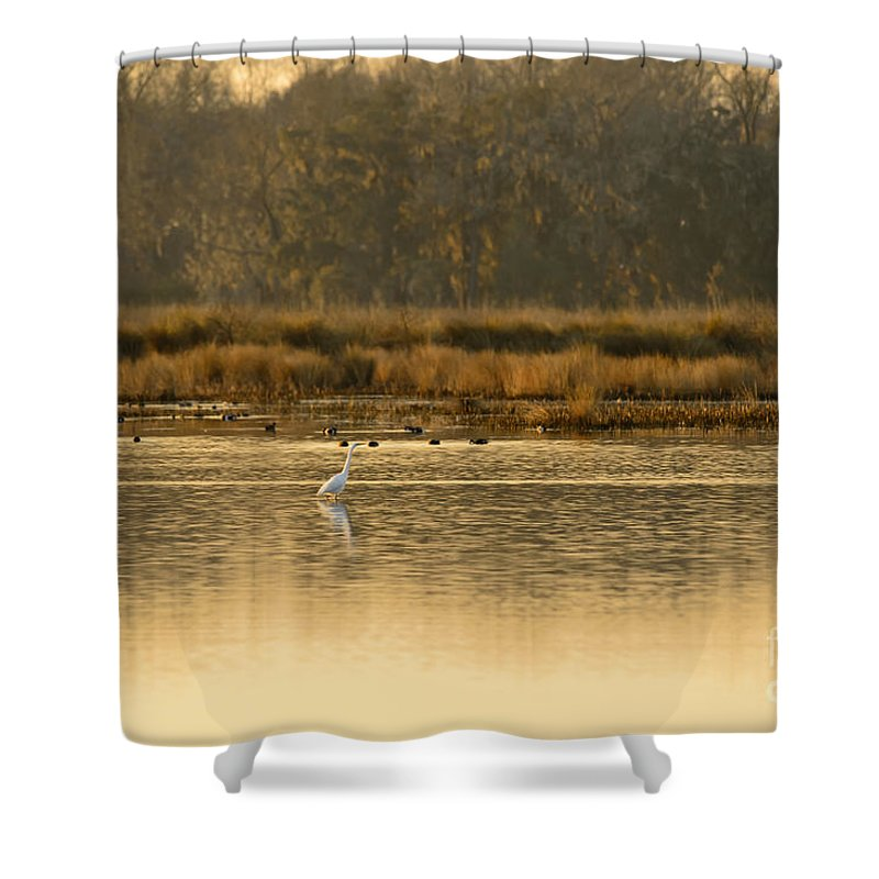 White Shower Curtain featuring the photograph Egret In The Low Country by Chip Laughton