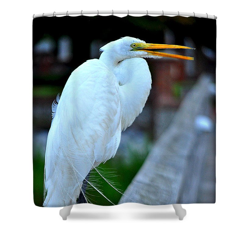 Egret Shower Curtain featuring the photograph Egret by Jennifer Maas
