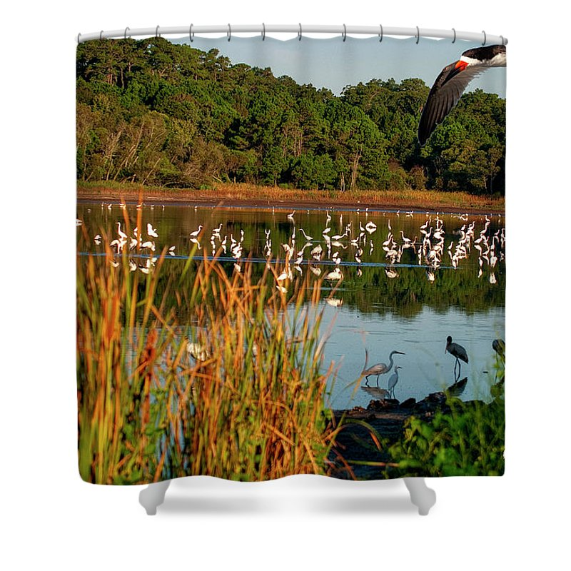 Egrets Lake Shower Curtain featuring the photograph Egret Lake by TJ Baccari
