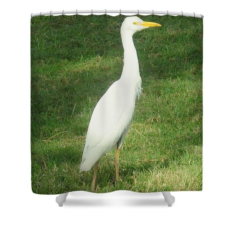 Egret Shower Curtain featuring the photograph Egret Posing by Ian MacDonald