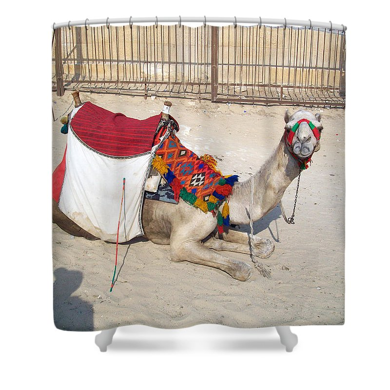 Egypt Shower Curtain featuring the photograph Egypt - Camel by Munir Alawi