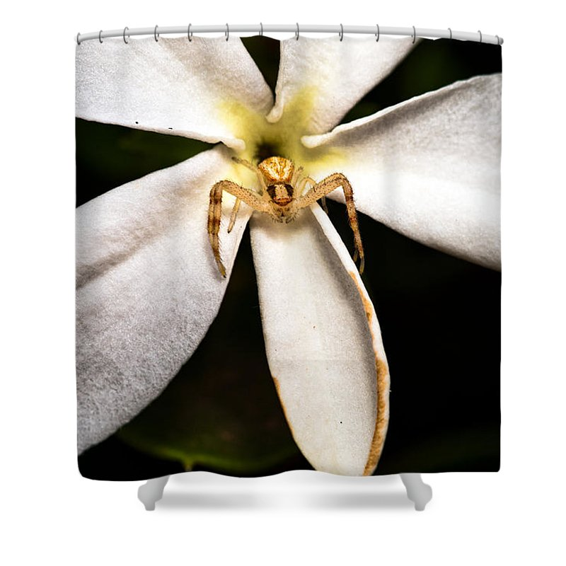 Spider Shower Curtain featuring the photograph Eight Legged Goalie by Christopher Holmes