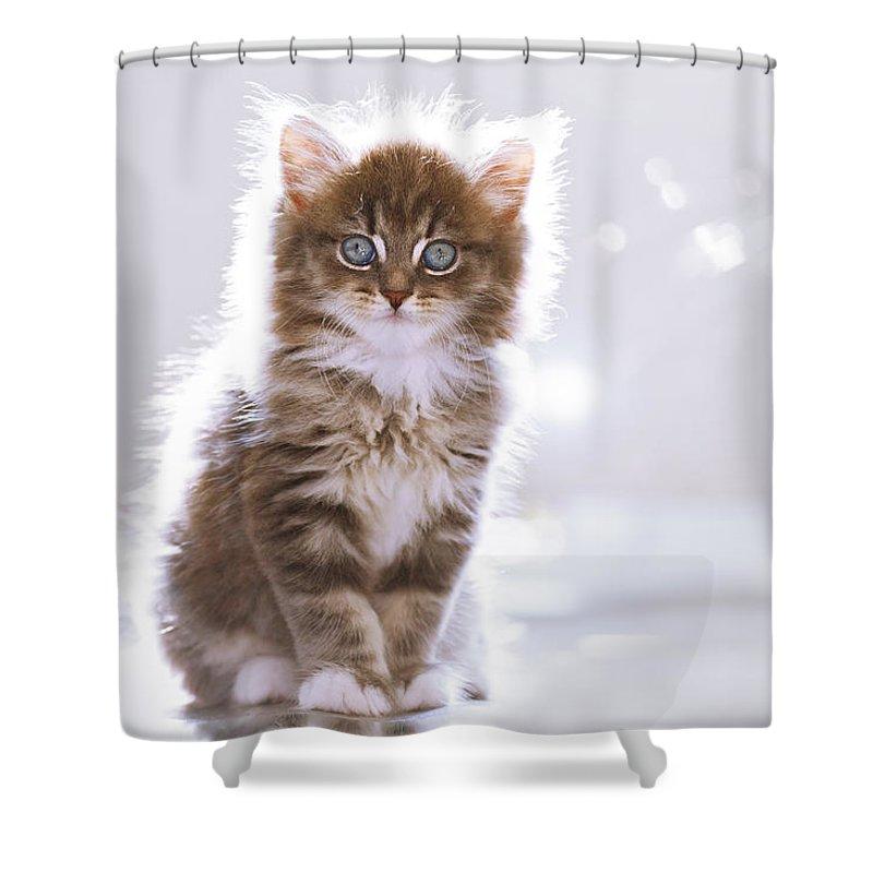 Norwegian Forest Cat Shower Curtains | Fine Art America