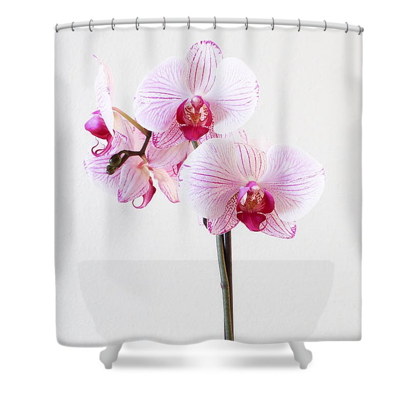 Flowers Shower Curtain featuring the photograph Elegant Orchid by Anita Oakley