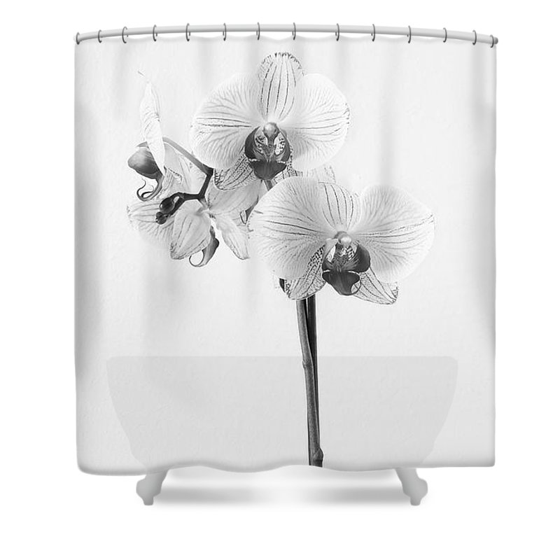 Flowers Shower Curtain featuring the photograph Elegant Orchid II by Anita Oakley