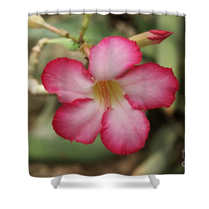 Floral Shower Curtain featuring the photograph Elegant by Shelley Jones
