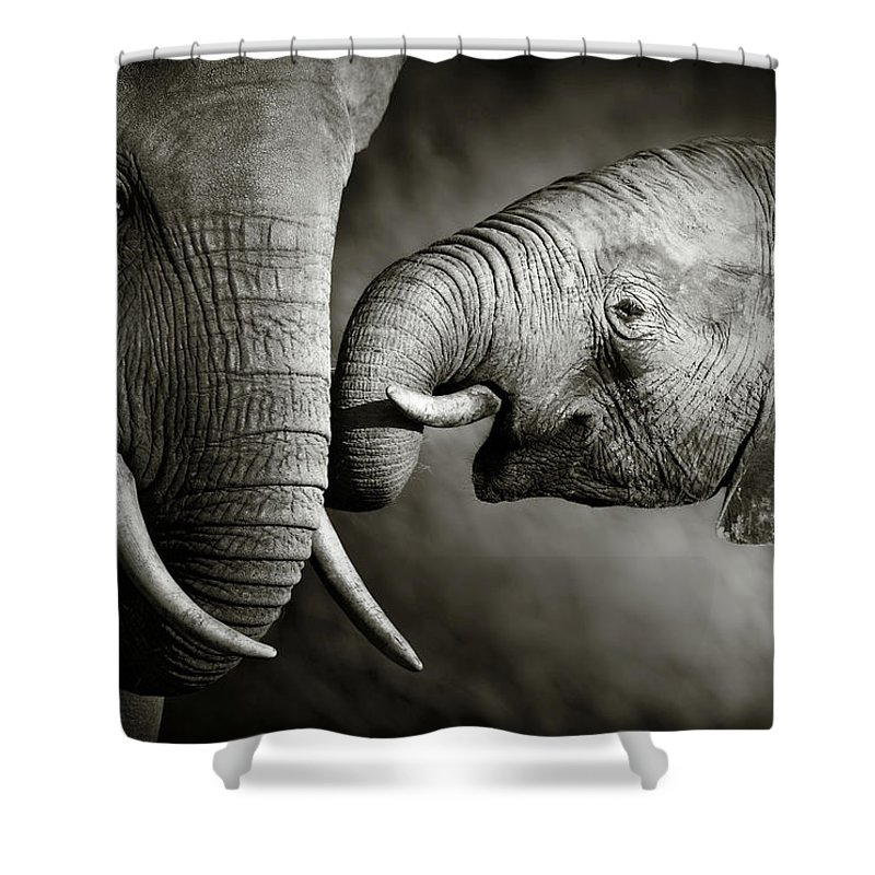 Elephant; Interact; Touch; Gently; Trunk; Young; Large; Small; Big; Tusk; Together; Togetherness; Passionate; Affectionate; Behavior; Art; Artistic; Black; White; B&w; Monochrome; Image; African; Animal; Wildlife; Wild; Mammal; Animal; Two; Moody; Outdoor; Nature; Africa; Nobody; Photograph; Addo; National; Park; Loxodonta; Africana; Muddy; Caring; Passion; Affection; Show; Display; Reach Shower Curtain featuring the photograph Elephant affection by Johan Swanepoel