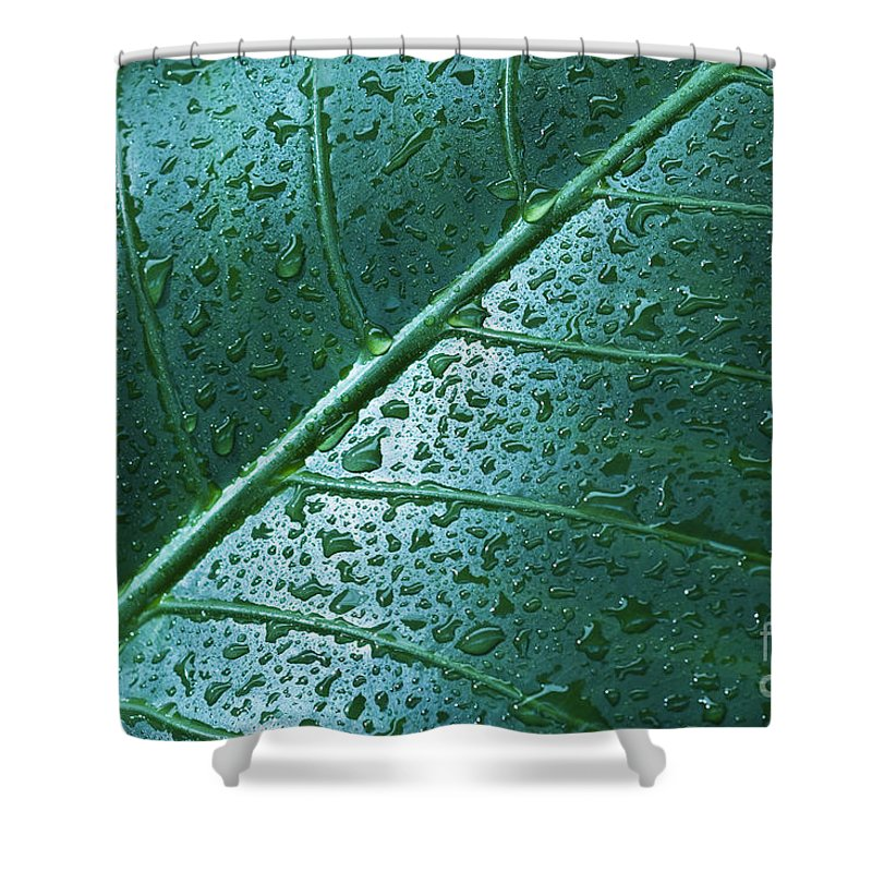 Abstract Shower Curtain featuring the photograph Elephant Ear Leaf by Dana Edmunds - Printscapes