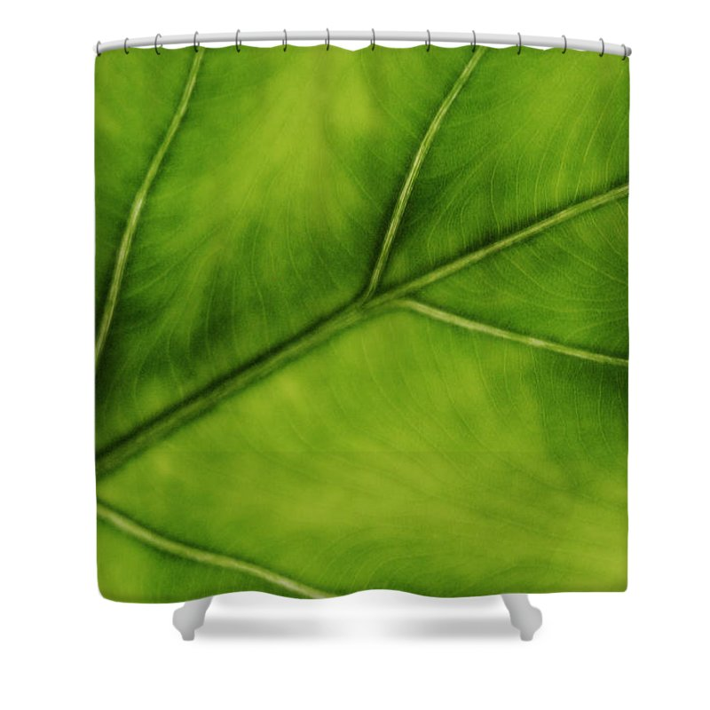 Leaf Shower Curtain featuring the photograph Elephant Ear by Marilyn Hunt