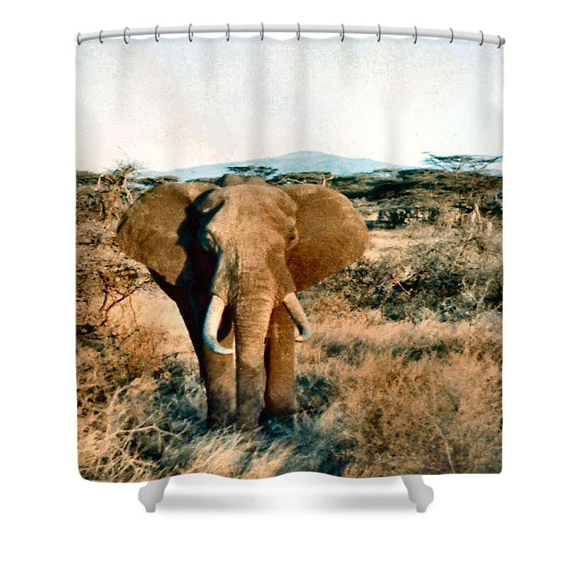 Elephant Shower Curtain featuring the photograph Elephant Eyes by Lin Grosvenor