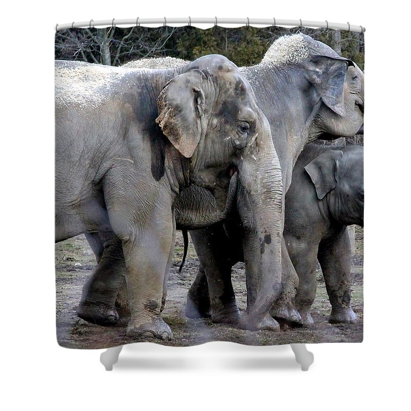 Asian Elephant Shower Curtain featuring the photograph Elephant Family by Laurel Talabere