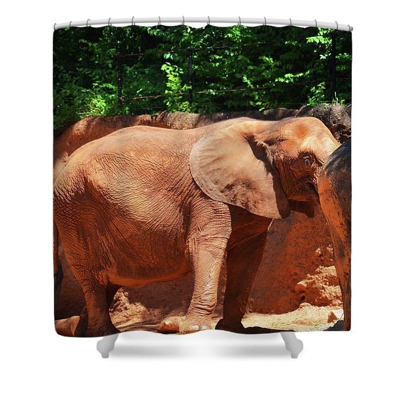 Shower Curtain featuring the photograph Elephant In Red Clay by Brian Sloan