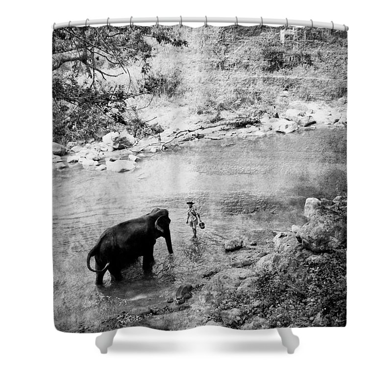 Elephant Shower Curtain featuring the photograph Elephant by Julita Pietrzyk
