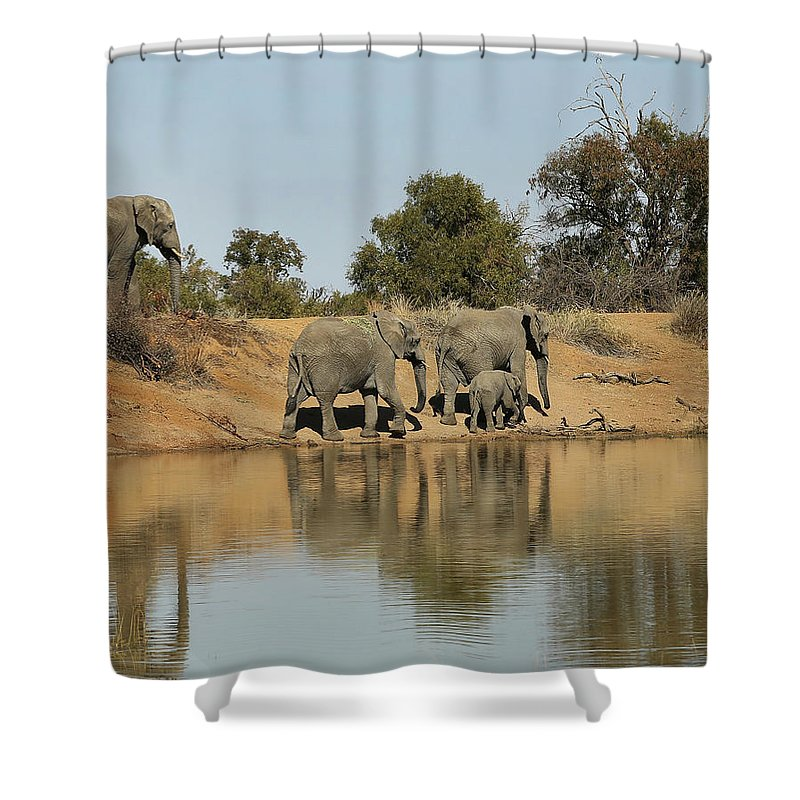 Elephant Shower Curtain featuring the photograph Elephant Refelction by Suzanne Morshead