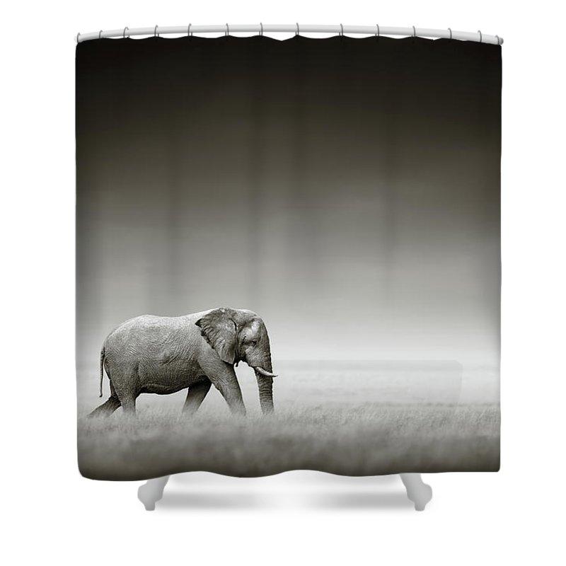 Elephant; Zebra; Behind; Follow; Huge; Big; Grass; Grassland; Field; Open; Plains; Grassfield; Dark; Sky; Together; Togetherness; Art; Artistic; Black; White; B&w; Monochrome; Image; African; Animal; Wildlife; Wild; Mammal; Animal; Two; Moody; Outdoor; Nature; Africa; Nobody; Photograph; Etosha; National; Park; Loxodonta; Africana; Walk; Namibia Shower Curtain featuring the photograph Elephant With Zebra by Johan Swanepoel