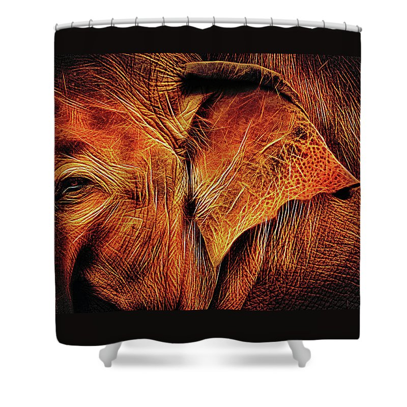 A Close-up Of An Elephant's Face With His Large Ear As The Center Or Attraction Shower Curtain featuring the photograph Elephant's Ear by Elaine Walsh
