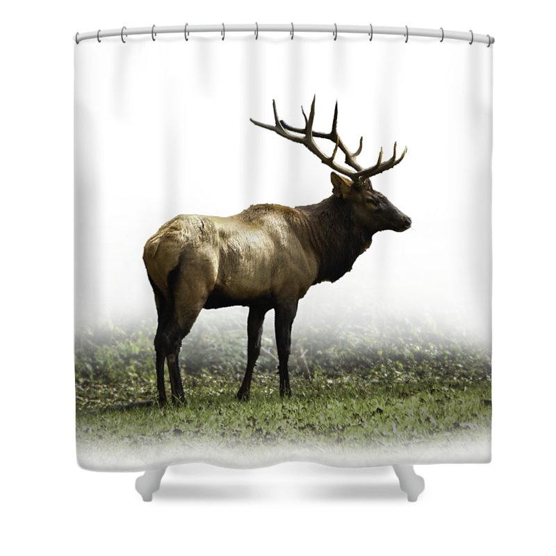 Elk Shower Curtain Featuring The Photograph IIi By Debra And Dave Vanderlaan