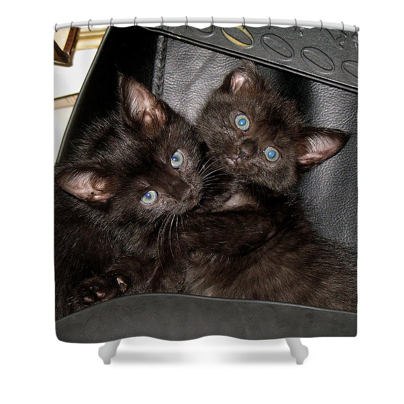 Cats Shower Curtain featuring the photograph Ellen And Elvira by Kenneth Albin