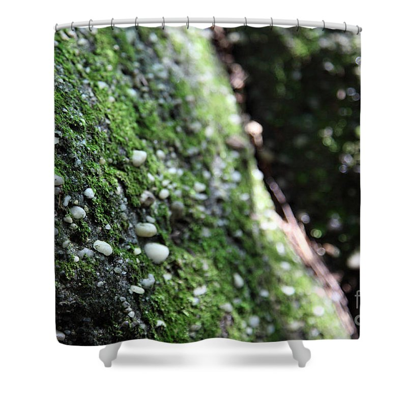 Rocks Shower Curtain featuring the photograph Embedded by Amanda Barcon