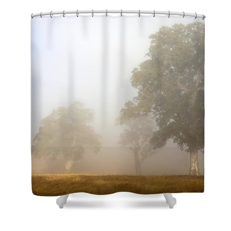 Gum Tree Shower Curtain featuring the photograph Emerging From The Fog by Mike Dawson