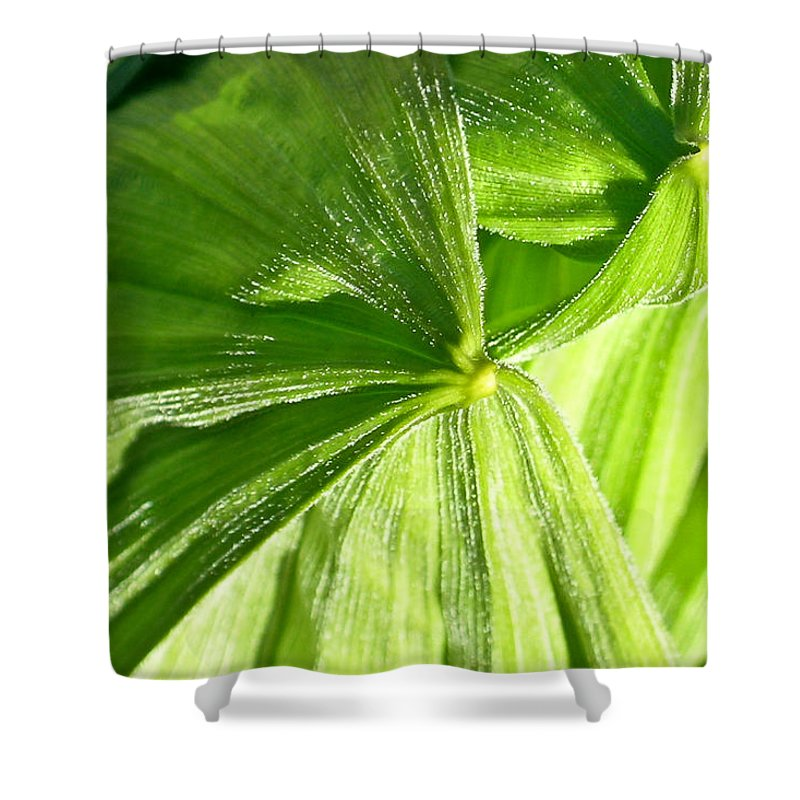 Plant Shower Curtain featuring the photograph Emerging Plants by Douglas Barnett
