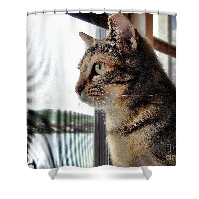 Cat Shower Curtain featuring the photograph Emma Again by Nora Martinez