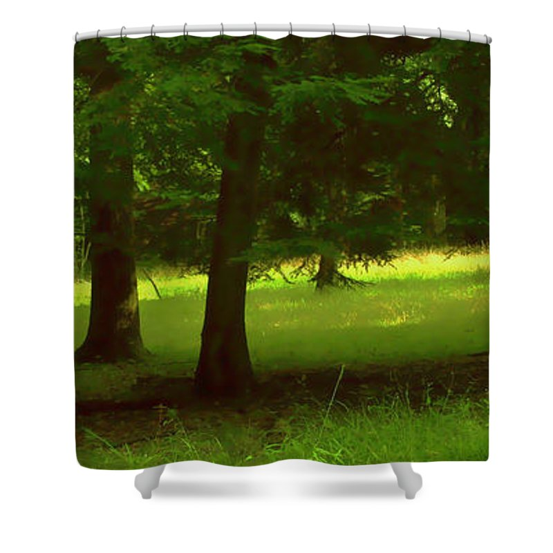 Nature Shower Curtain featuring the photograph Enchanted Forest by Linda Sannuti