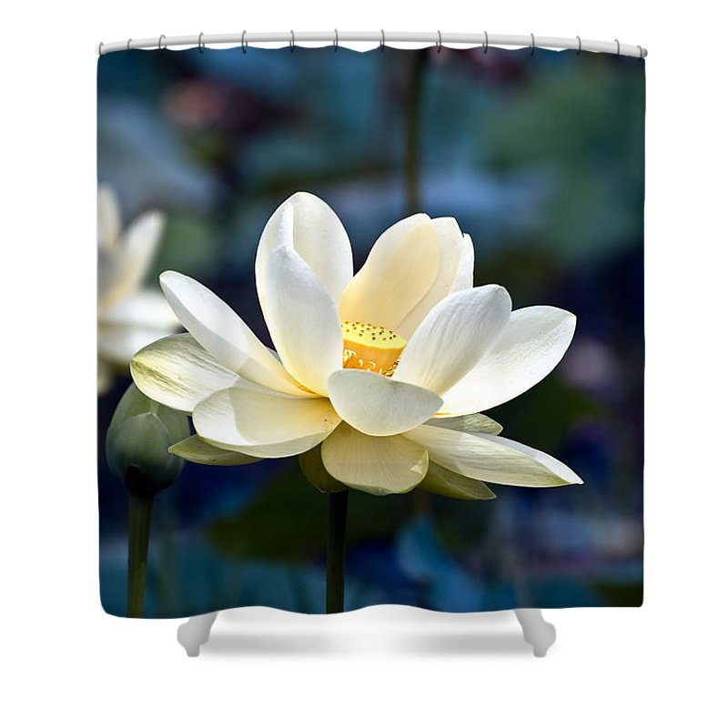 Lotus Shower Curtain featuring the photograph Enchanting Lotus by Rich Leighton
