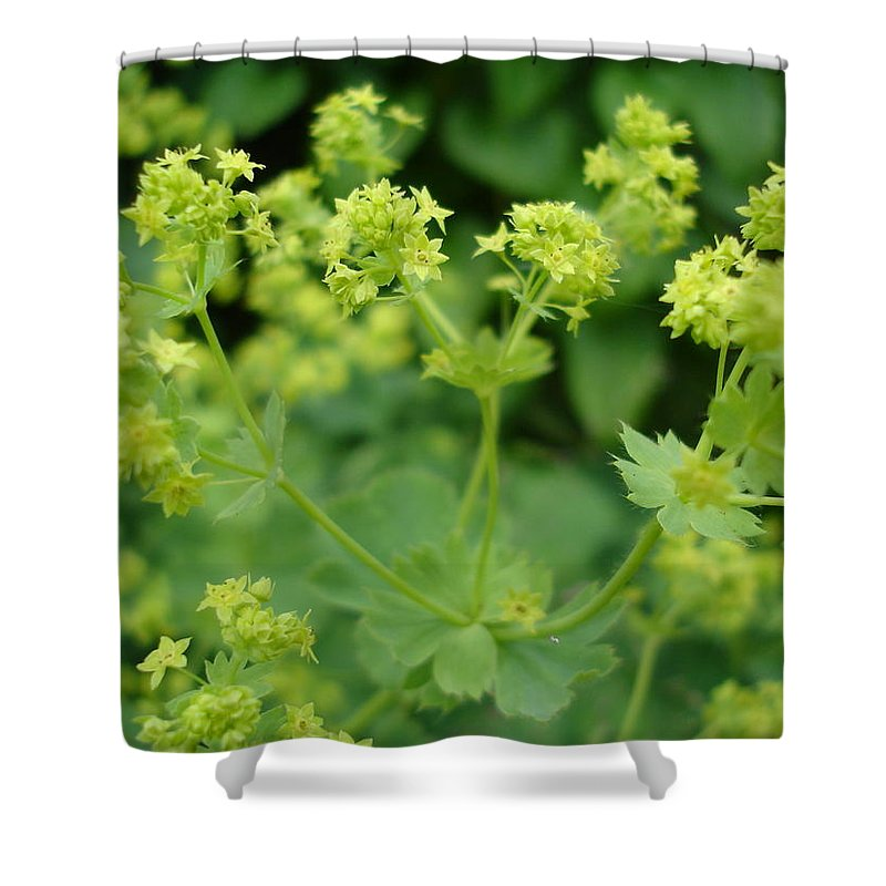 Plant Shower Curtain featuring the photograph English Ladys Mantle by Susan Baker