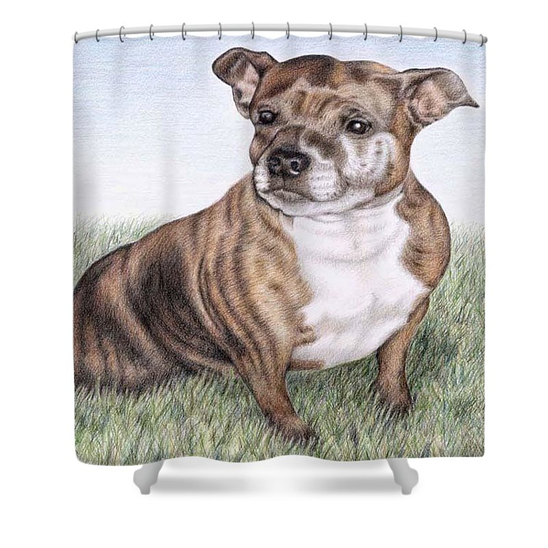 Dog Shower Curtain featuring the drawing English Staffordshire Terrier by Nicole Zeug