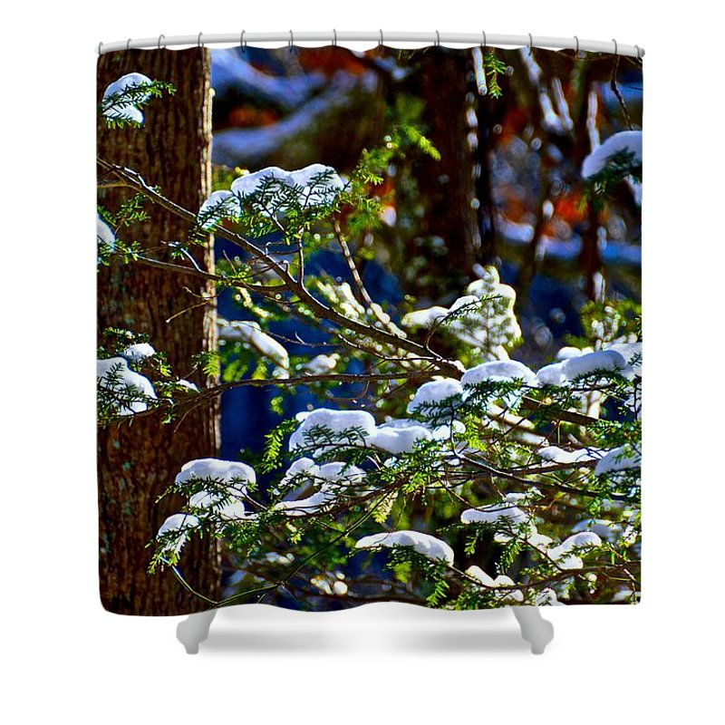 Forest Shower Curtain featuring the photograph Enlightened Winter by Dale Chapel