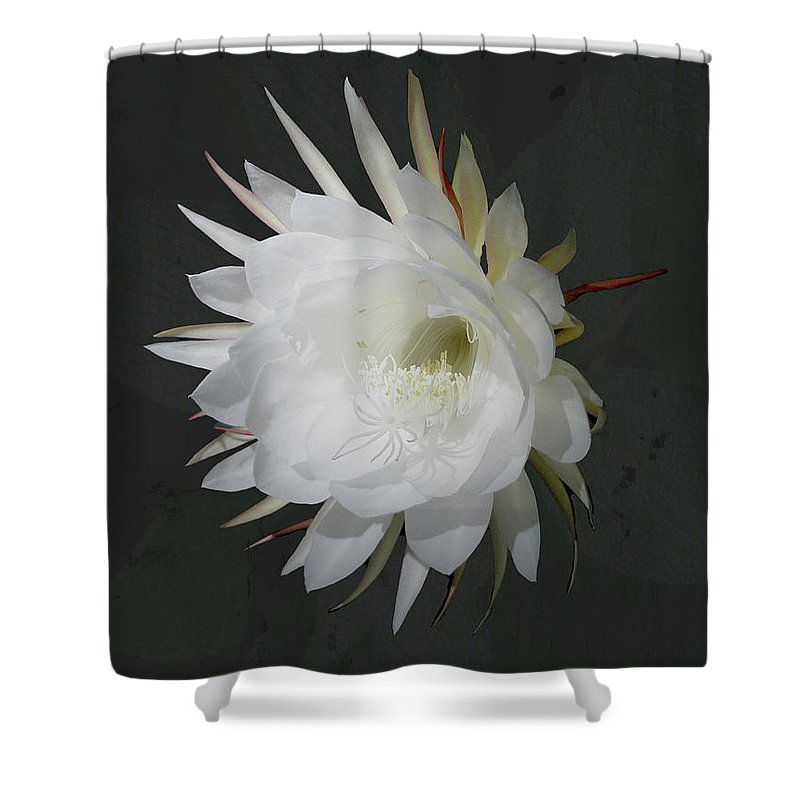 Flower Shower Curtain featuring the photograph Epiphyte Blossom - Epiphyllum Oxypetalum by Mother Nature