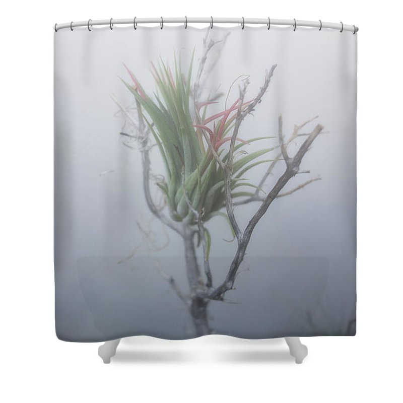 Epiphyte Shower Curtain featuring the photograph Epiphyte In The Fog by Barroa Artworks