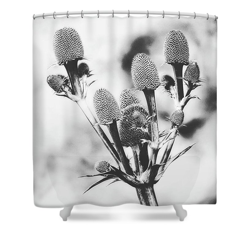Beautiful Shower Curtain featuring the photograph Eryngium #flower #flowers by John Edwards